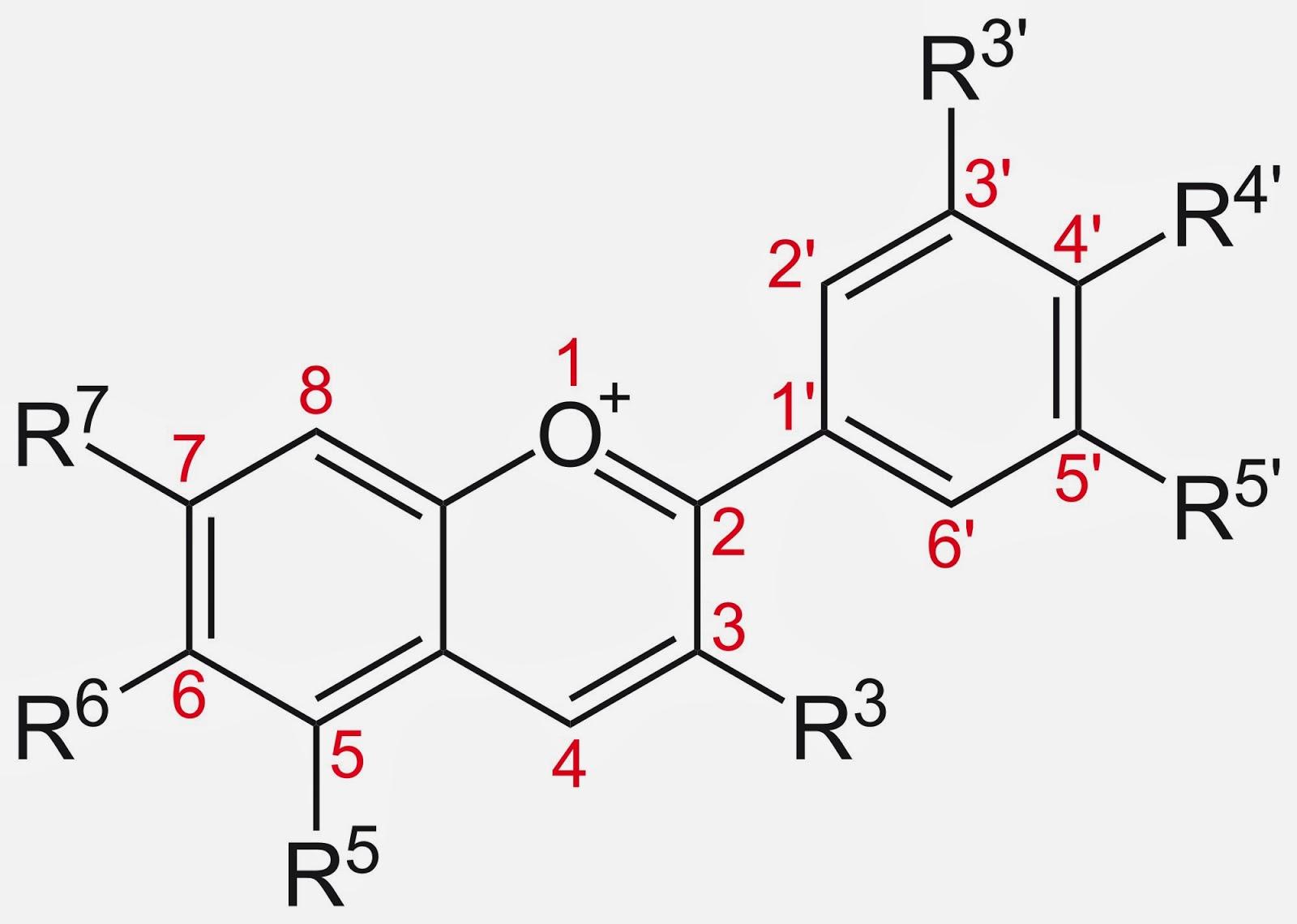 MOLECULE: some anthocyanin, yesterday