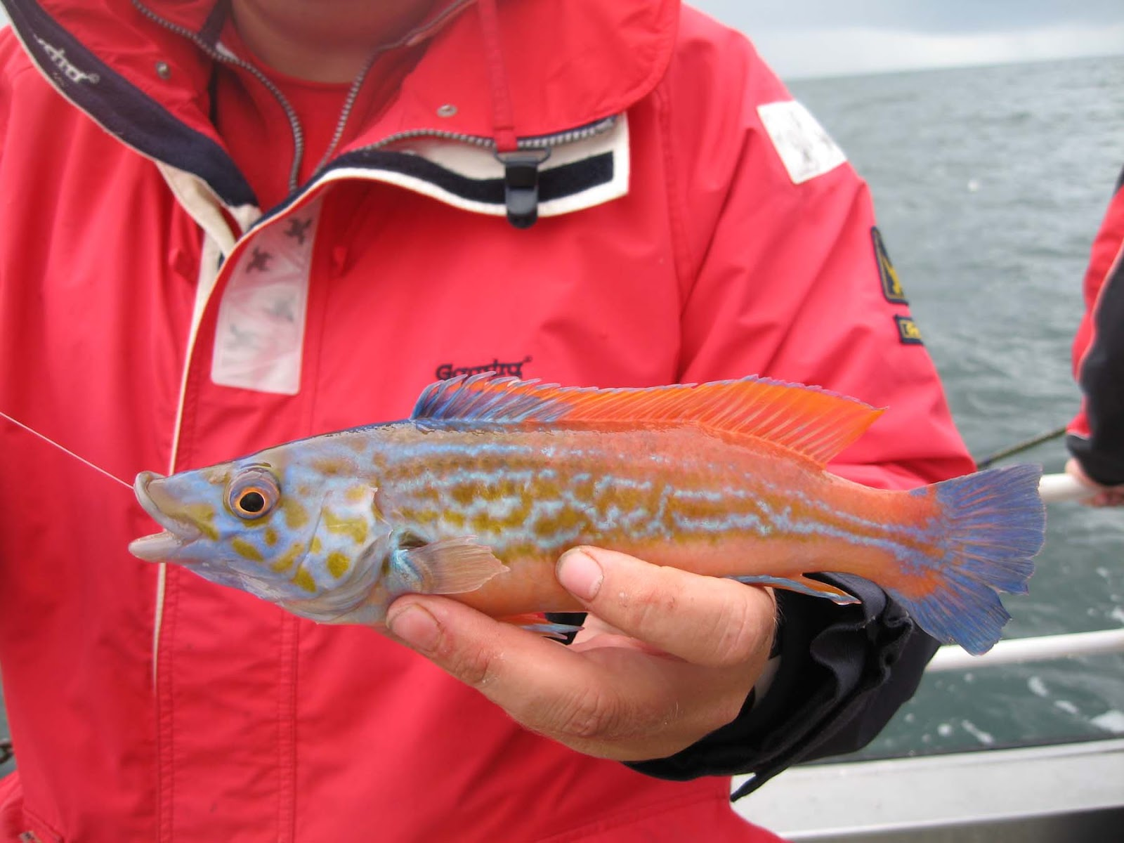 шотландская рыбалка