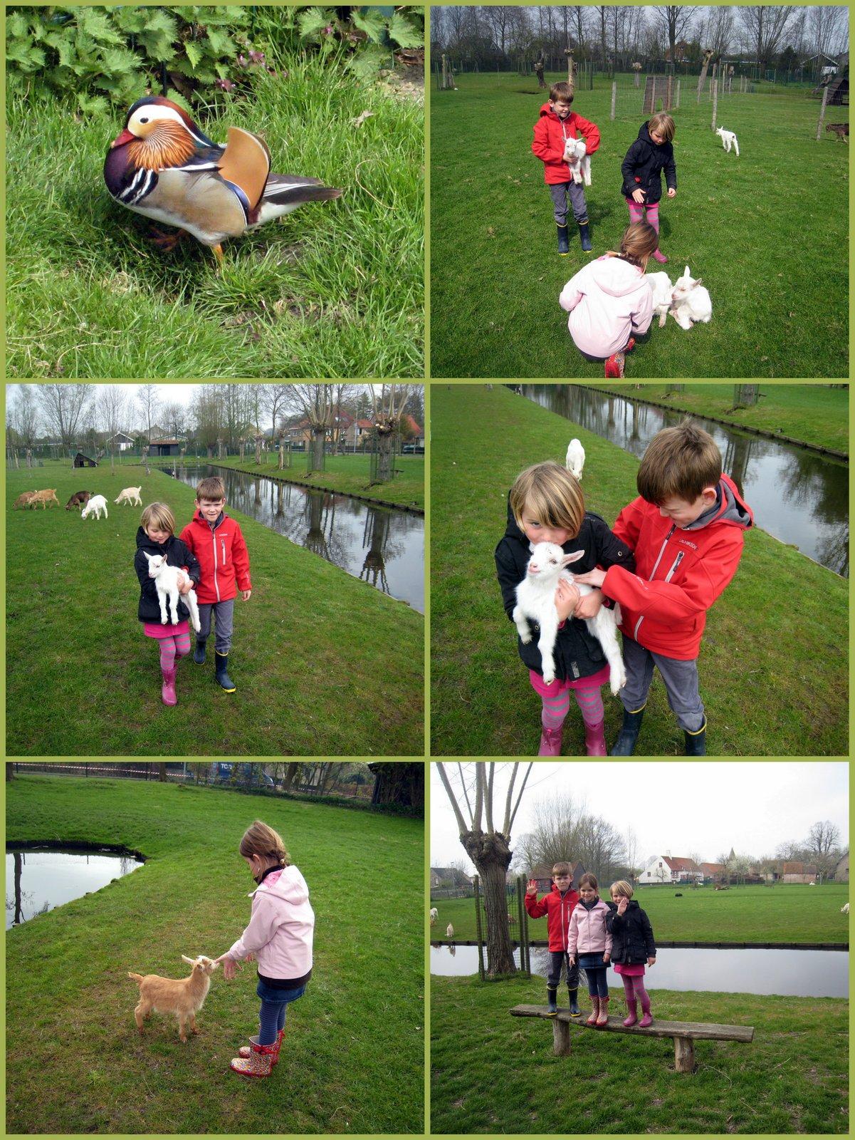 Oma maakte deze leuke wandeling en fotos, de geitjes gaat ze ...