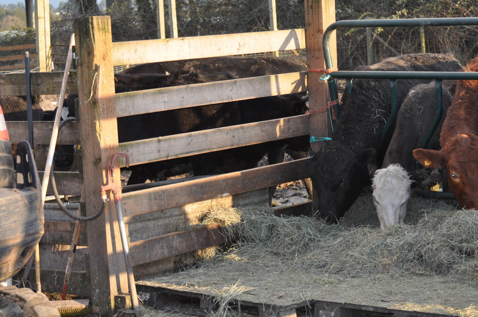Meat fencing 6 years later i have moved to the cattle panel or rail fences because they are easily repaired you pull a damaged panel and put in a new one in a few minutes baanklon Choice Image