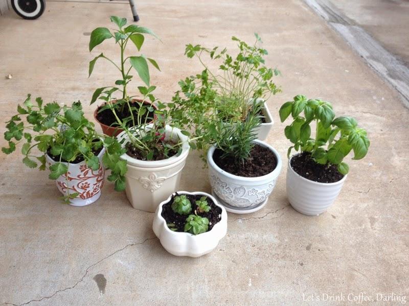 Let\'s Drink Coffee, Darling: Windowsill Herb Garden