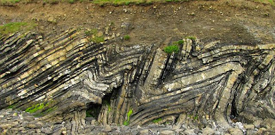 Folded sedimentary rocks (calcareous turbidite sequence) of Carbonferous age at Loughshinny, Ireland. The Variscan orogeny is responsible for the folding