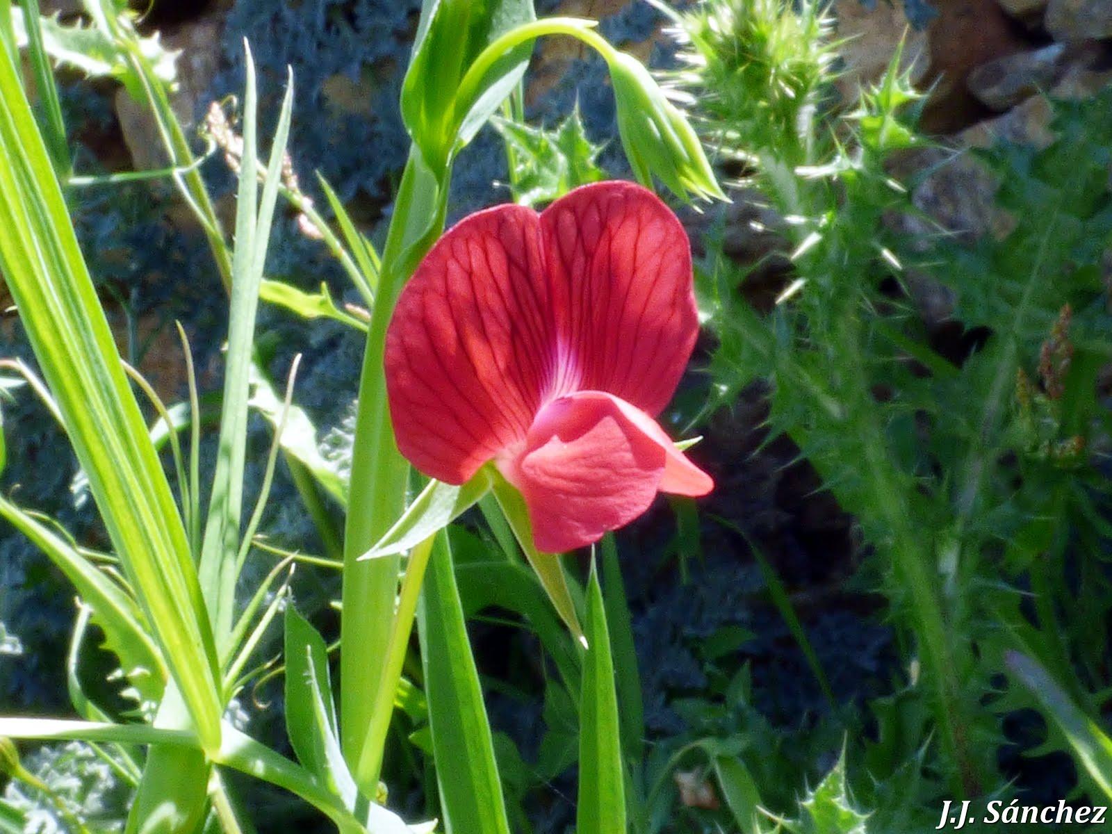 Flora y Fauna de Montehermoso