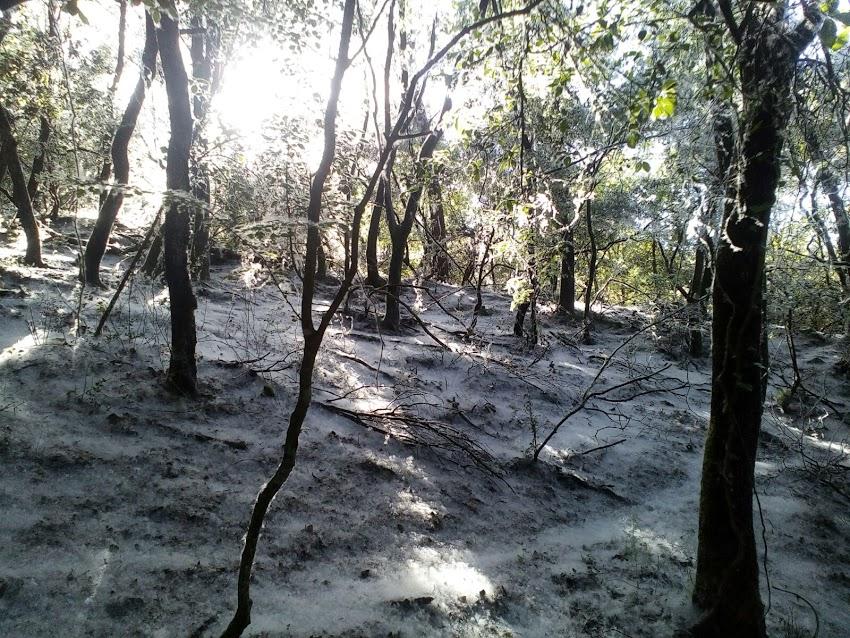 Bosc fantasma