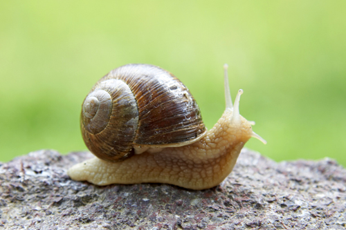 In Full Bloom: accomplishing stuff, and snails. L Mollusks