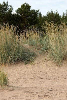 hiekkadyyni