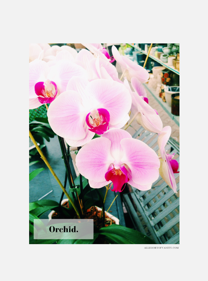 Spring Flower Show | Orchid | Allegory of Vanity