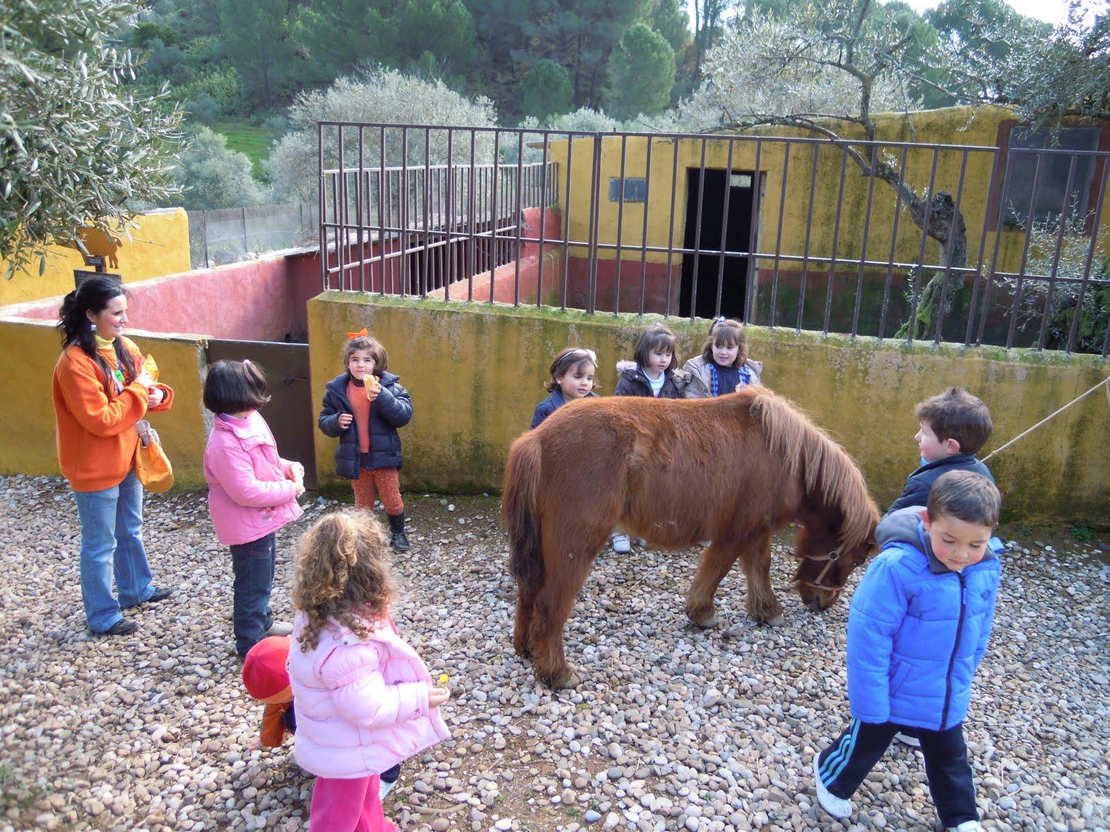 San Sebastian de la Gomer Spain  city photos : SAN SEBASTIÁN: Visita a la granja escuela de Cabriñana