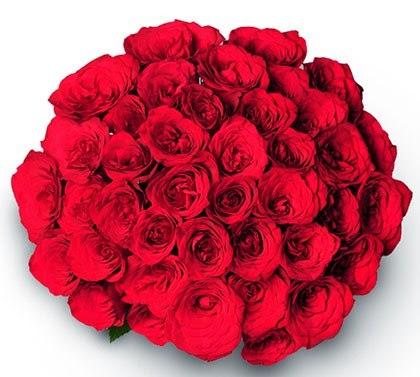 Valentine flowers giftalove com best online gifting portal