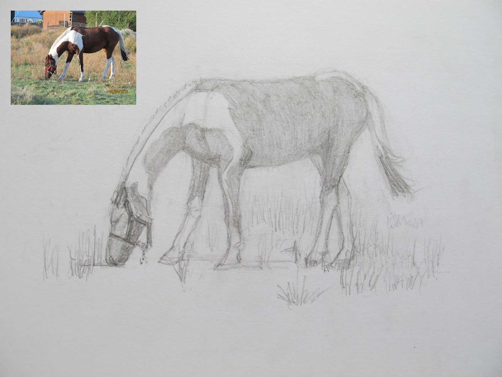 Jean's Journal: Drawing 17: Horse Grazing | 1600 x 1200 jpeg 227kB