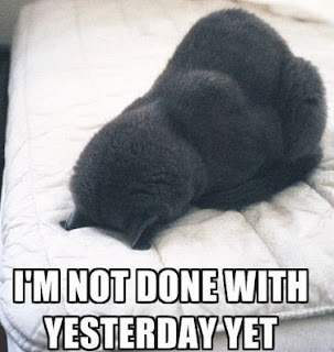 """I'm not done with yesterday yet"" cat face-planting into bed"