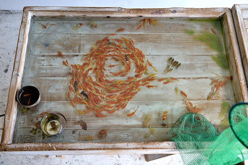 Pez de colores realistas pintados en acrílico entre capas de resina de Riusuke Fukahori