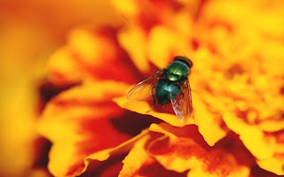 fly on flower (12)