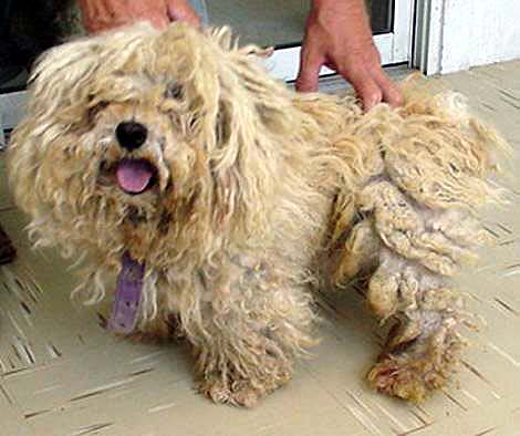 How Do You Get Matted Hair Out Of A Dog