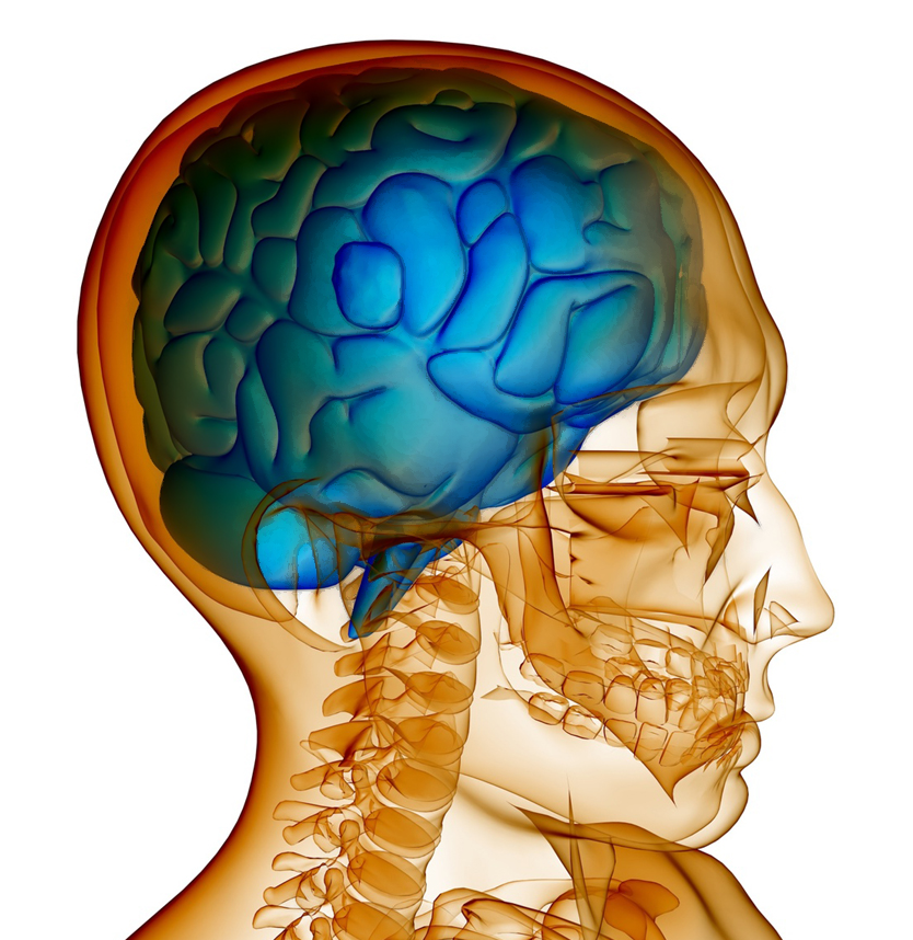 Increase brain function and memory image 3