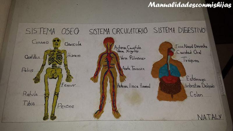 Manualidades con mis hijas: Sistema oseo, circulatorio y digestivo ...
