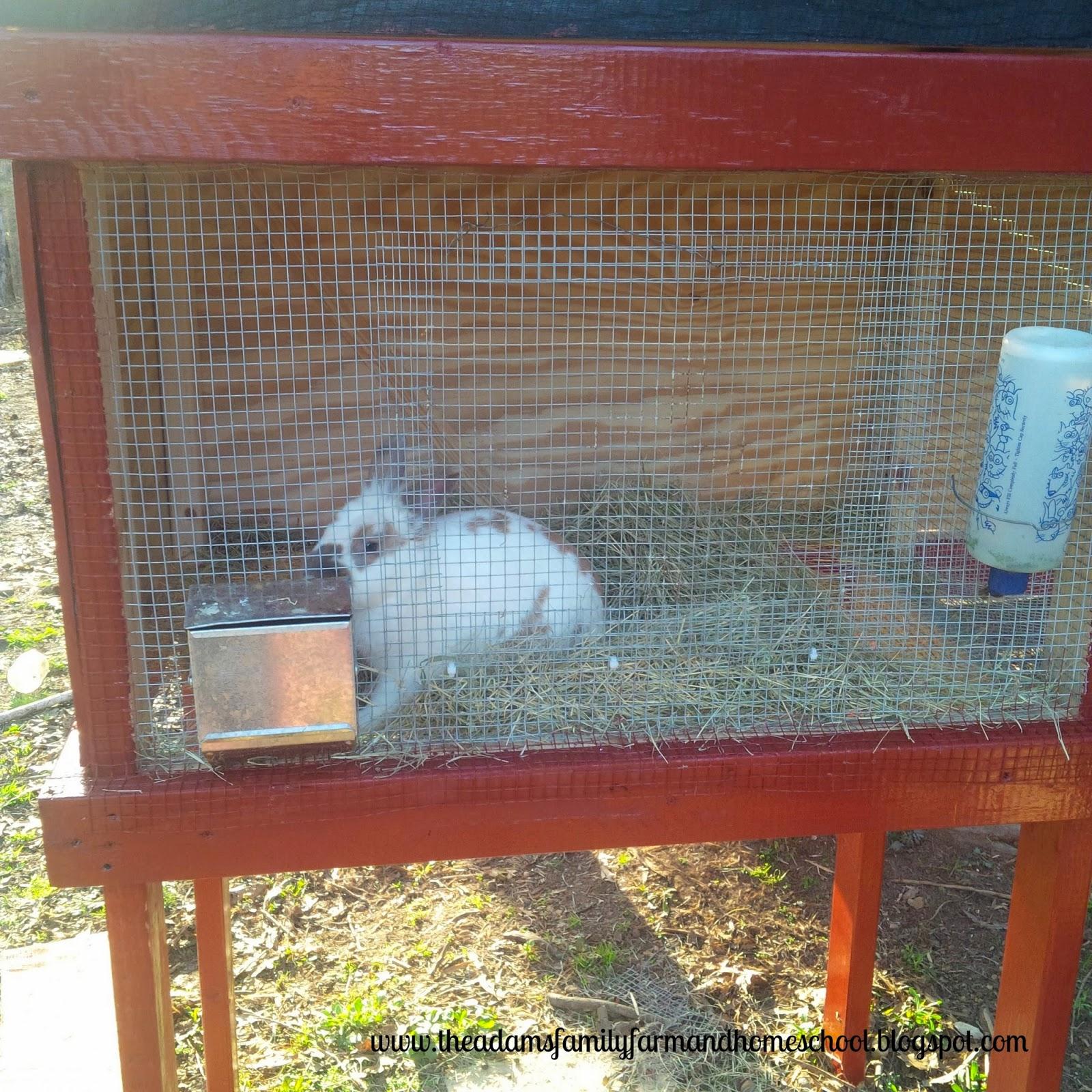 Rabbit Enjoying His New Cage