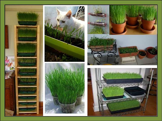 Jardim para gatos for Plantas toxicas gatos