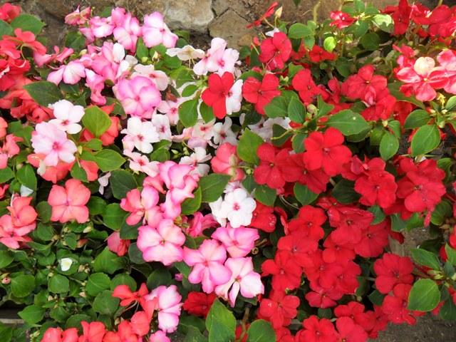 Plantas y flores mariany temporada invierno for Jardineria la noguera