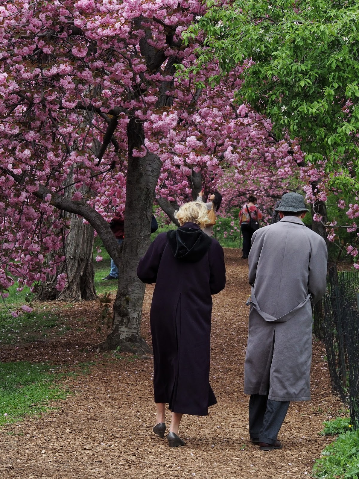 Cherry Blossom Walk #frombehind #cherryblossoms #walkers #nyc 2014