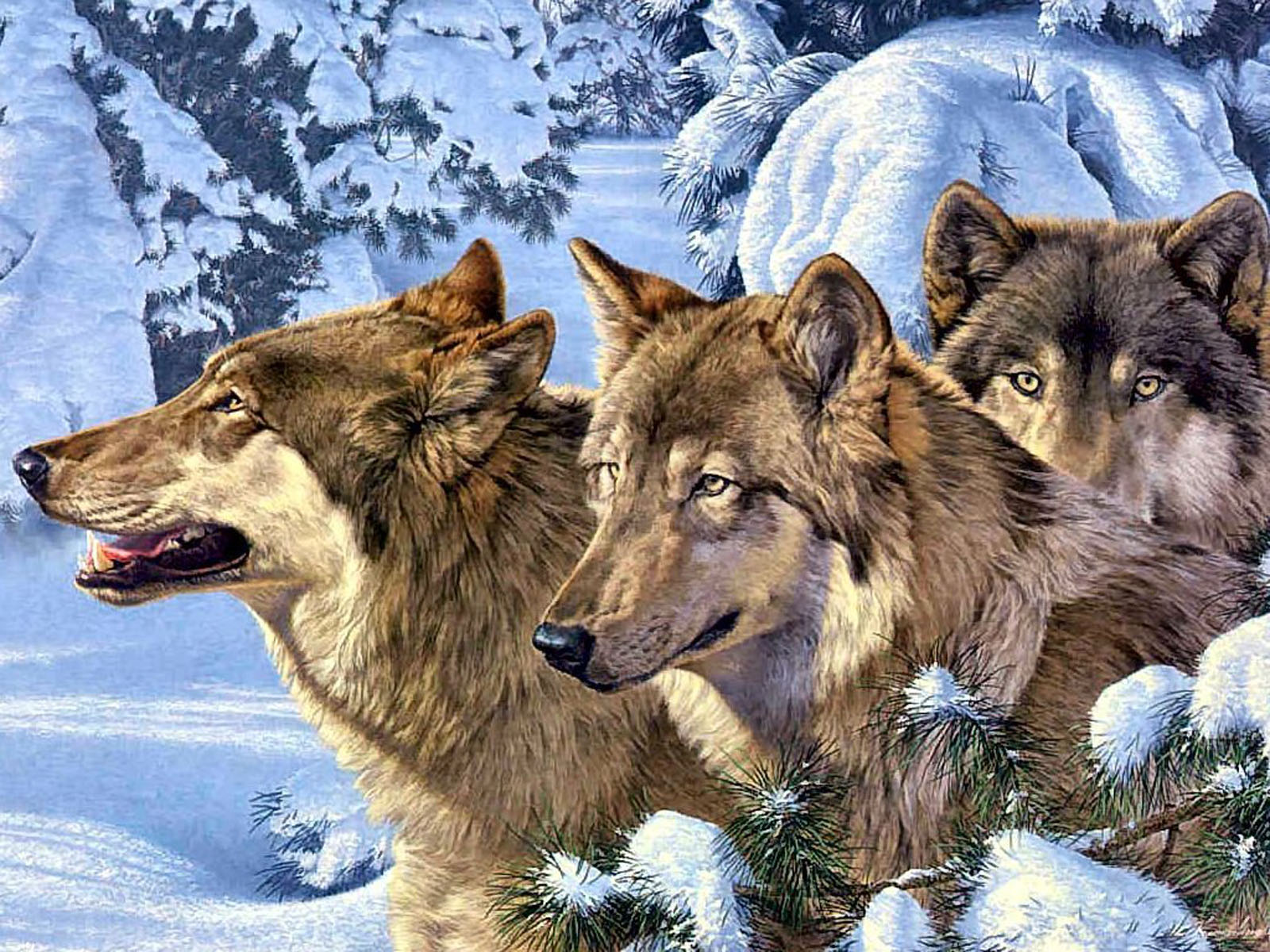 Tags Vision Of The Wolf Wallpapers Images Pictures And Photos For Free
