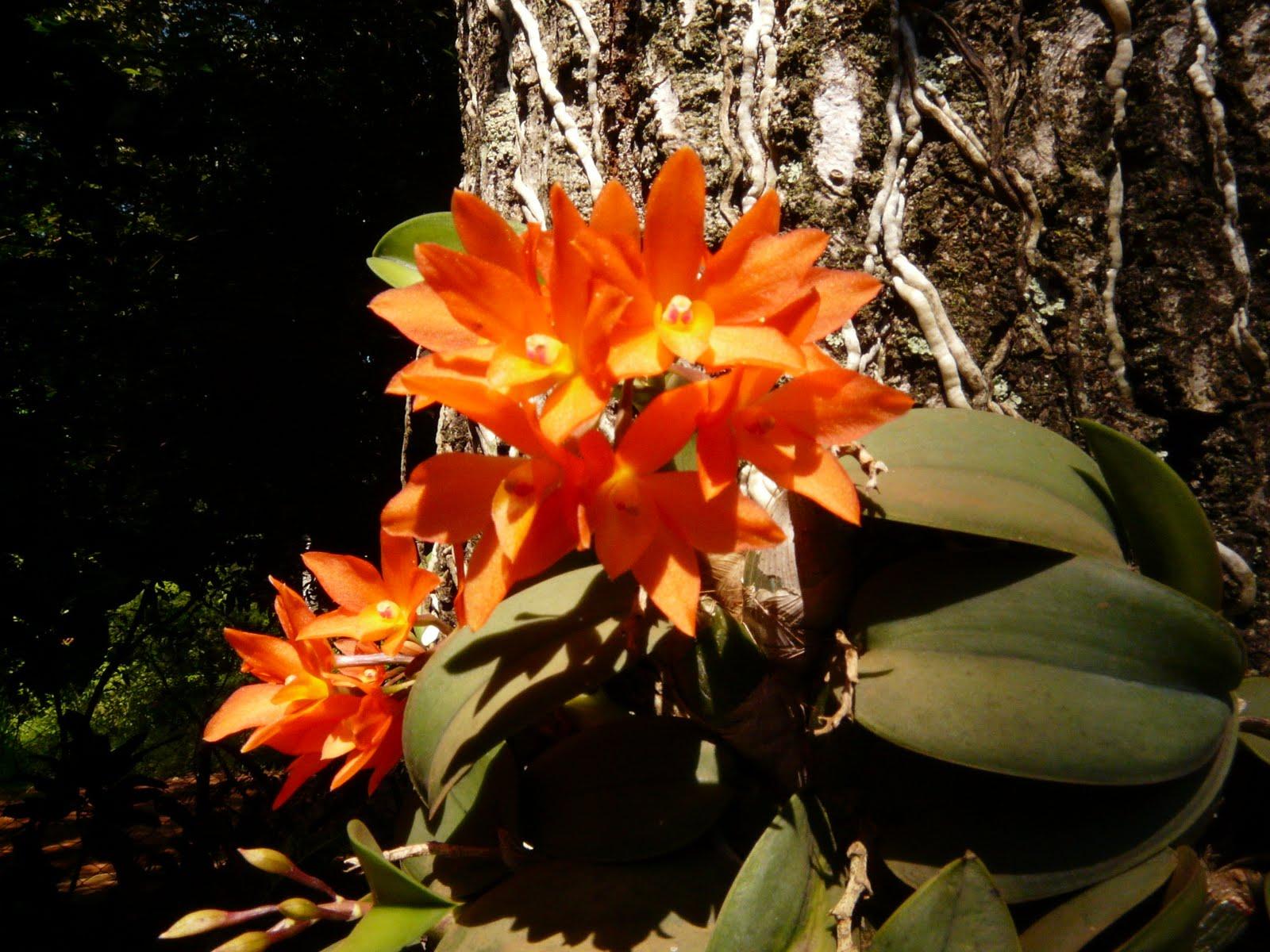 Fotos De Flores Muy Hermosas - Bonitas imagenes de aves y flores, con musica para