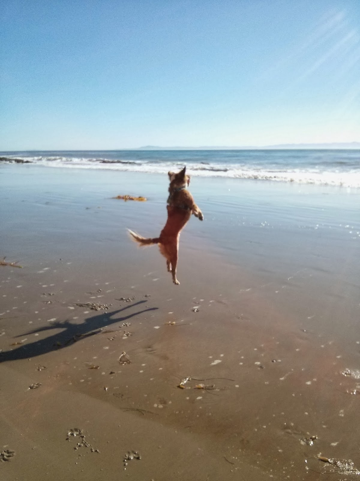 dog jumping straight up