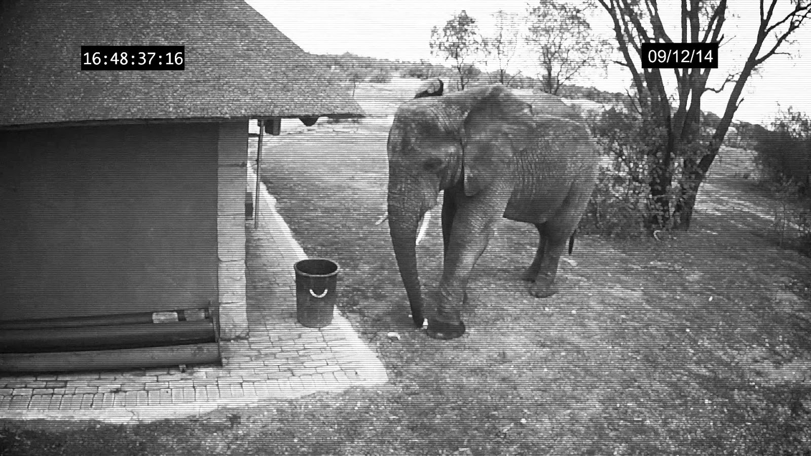 Elephant Caught on CCTV Cameras Cleaning Up The Trash