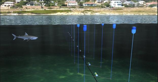 Nova tecnologia está a ser testada para afastar os tubarões das praias