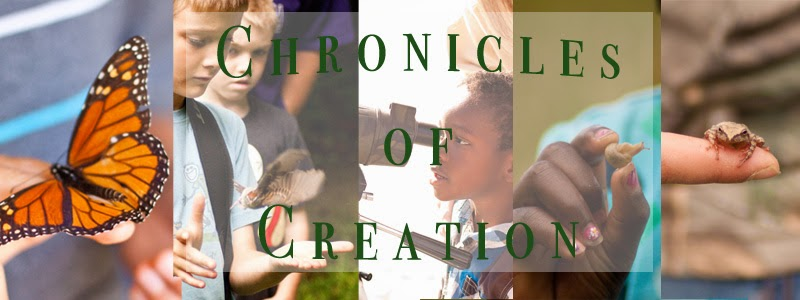 Chronicles of Creation