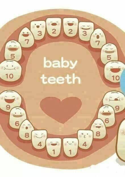 Gigi Pertama Si Kecil