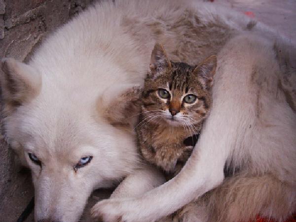 Y para aquellos que no creen que los perros y los gatos pueden vivir como verdaderos socios, Sheila dice \u0026quot;Tuve un cliente hace unos años que tenía un gato