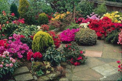 Vocaci n de jardinero arbustos y trepadoras en el jard n for Jardines pequenos horizontales