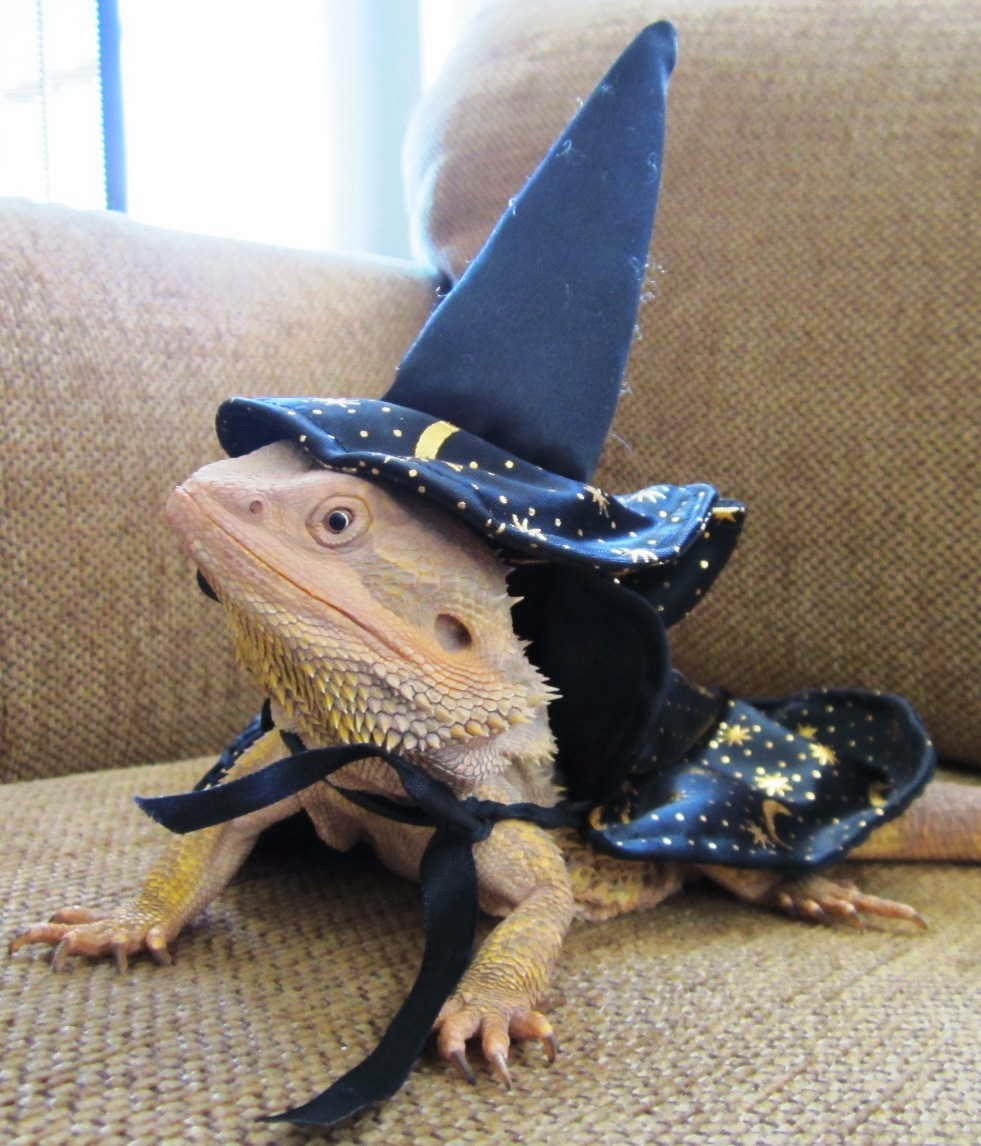 Funny animals of the week - 17 January 2014 (40 pics), iguana wears wizard costume
