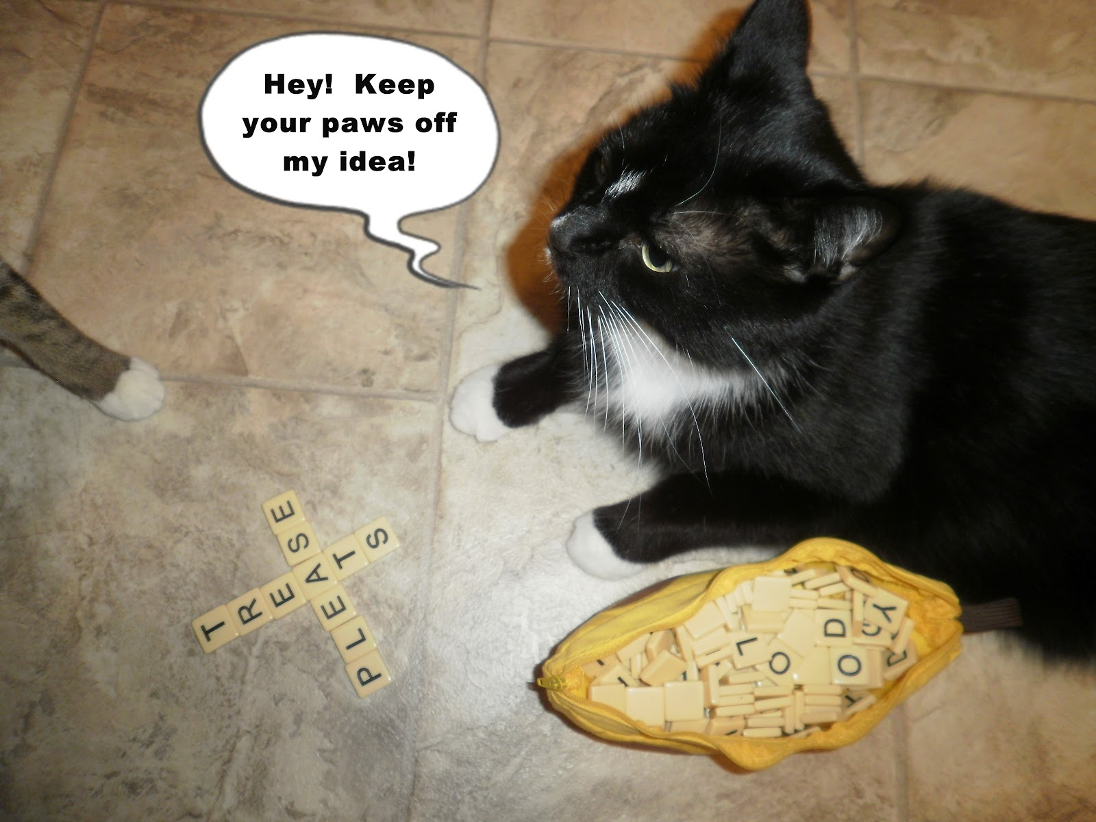 Catladyland Cats are Funny Cat Wants the Final Word