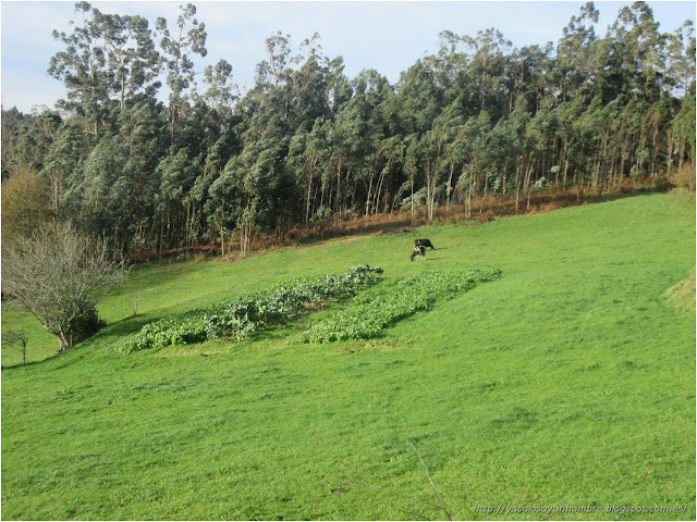 Los eucaliptos los dobla el viento, a las vacas no