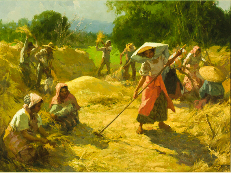 Rice Harvest Carabao Musings