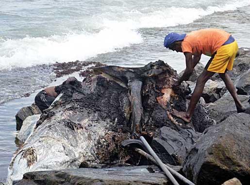 A Dead Whale Found at Wellawaththa  Beach photo