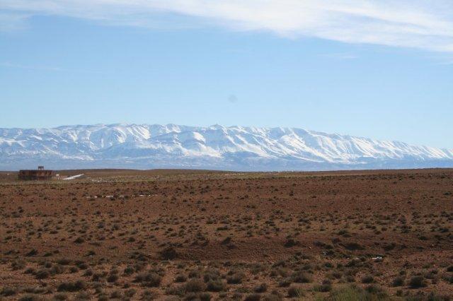 woestijn bedekt met sneeuw