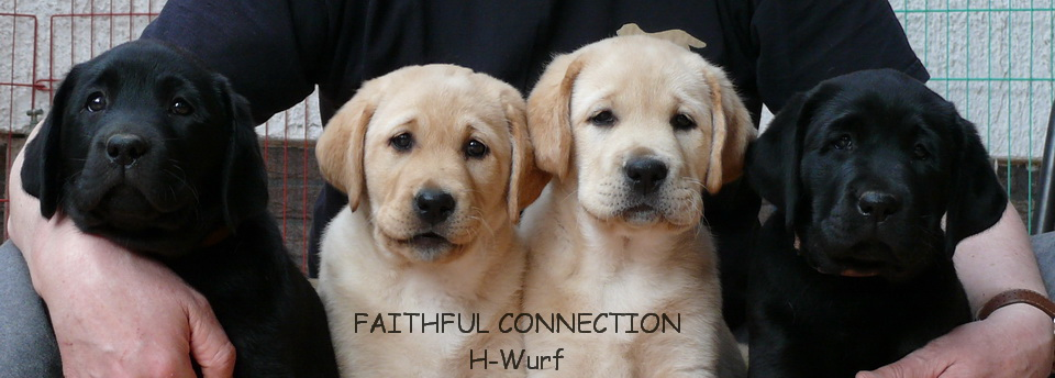 Faithful Connection Hope For Love