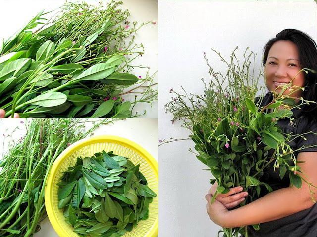 foodiva u0026 39 s kitchen  ginseng leaf salad with pomegranate  orange and green thai mango