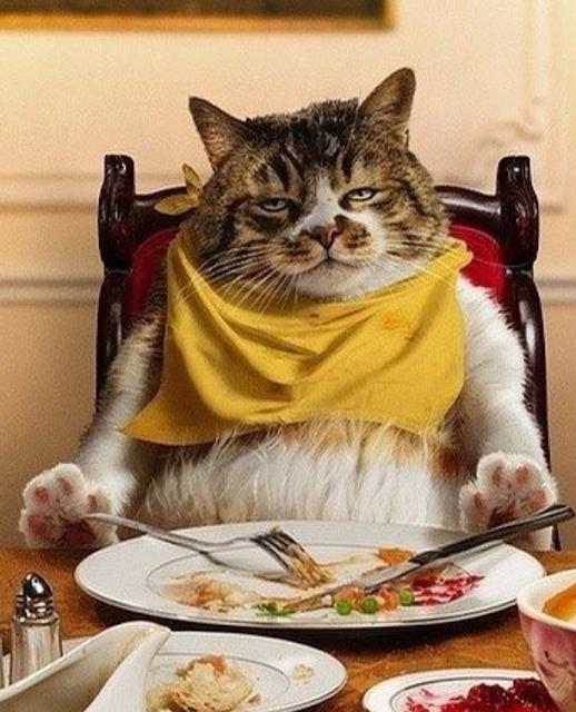joke, comic, monday blues, fat cat