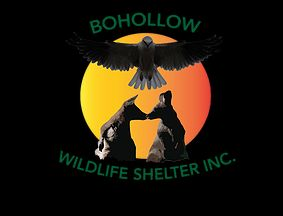 Please donate to help my friend Kirsty continue her great work at Bohollow Wildlife Shelter