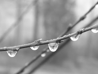 black and white photo of rain drops hanging from a bare branch