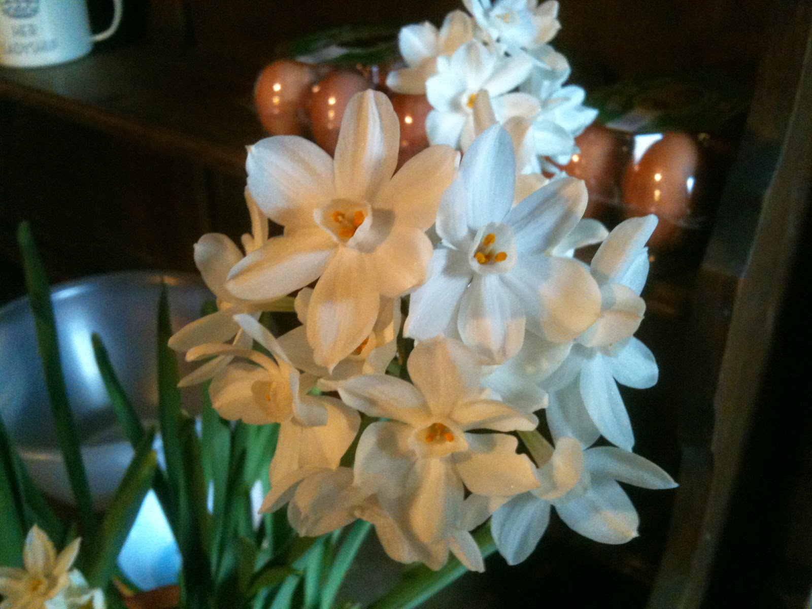 Paper Whites create a heady scent in the house #lifeonpigrow
