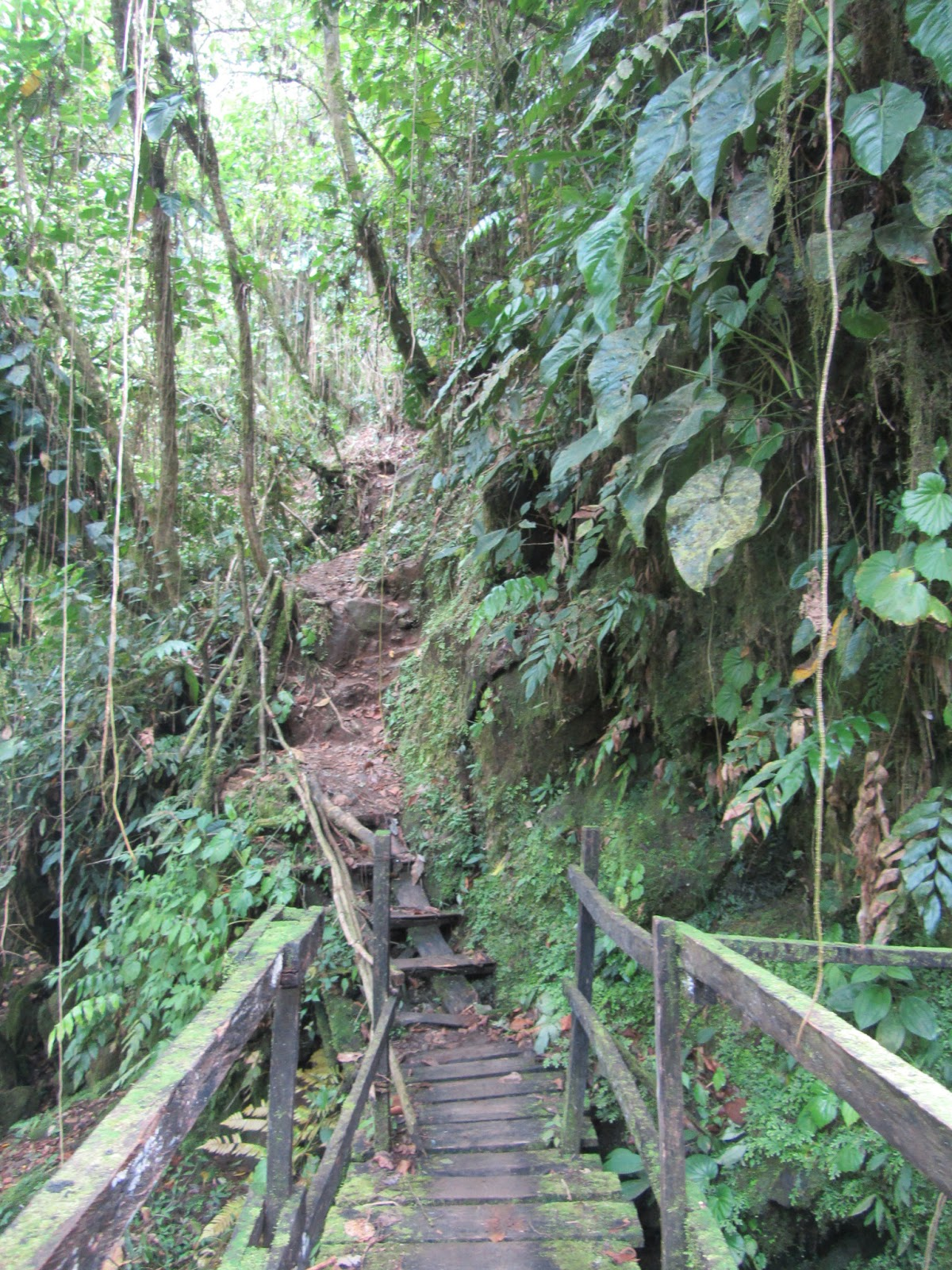 The Lost City (Ciudad Perdida) trek in Colombia