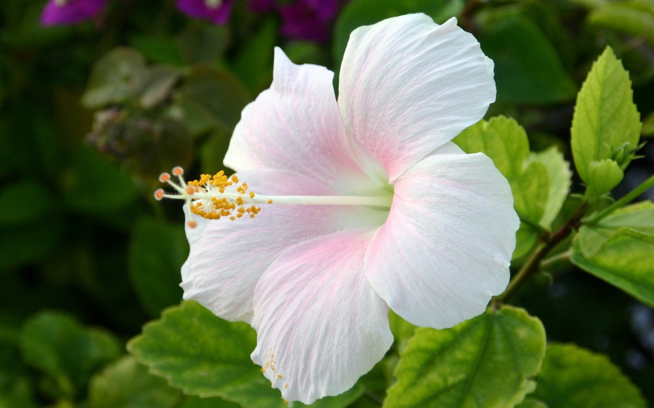 Flower Homes: Beautiful White Flowers Pictures Of Flowers