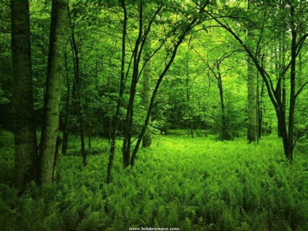 http://4.bp.blogspot.com/-kJuIfKsSOXg/T-vqNmgAi3I/AAAAAAABjDM/lHc4jGclzfA/s1600/Nature_Wallpapers-006.jpg