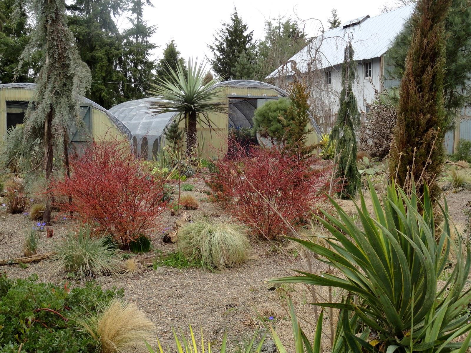danger garden: Visiting the O\'Byrnes nursery and garden…