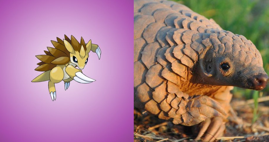 Sandslash - Pangolin